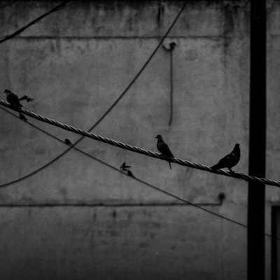 Photo by Sofia Tsofio
